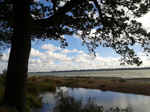 Oak, salt marsh, Fawley Oil Refinery